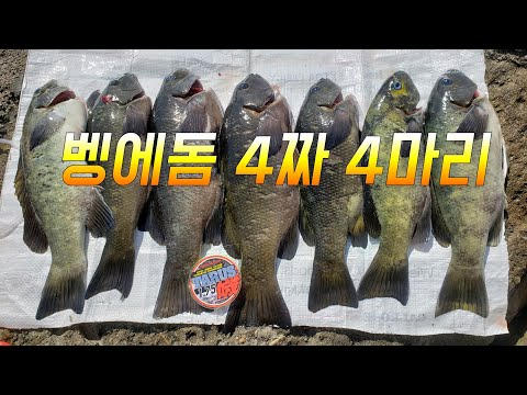 4짜 벵에돔 3연타로. 87회 Opaleye Rock Fishing Palos Verdes