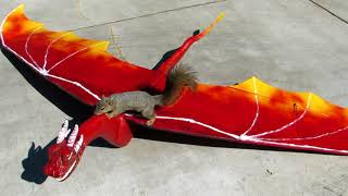 Squirrel Steals Dragon