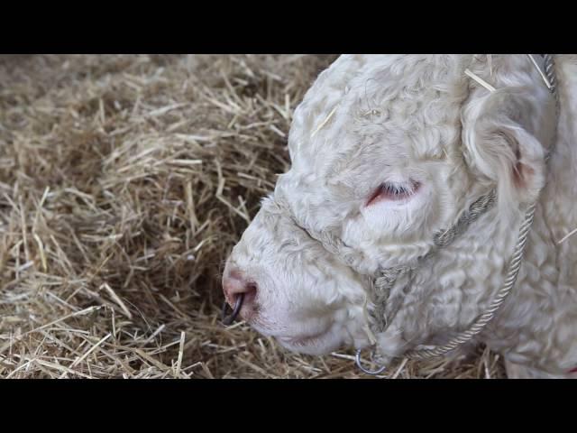 XXIII. Alföldi Állattenyésztési és Mezőgazdasági napok - 2. nap