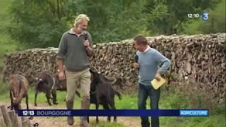 C'est votre tour - Aubrac, chèvres et Pie Rouge... En Saône-et-Loire