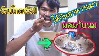 แกล้งจ็อบเอาอาหารแมวให้กินผสมกับนม!!