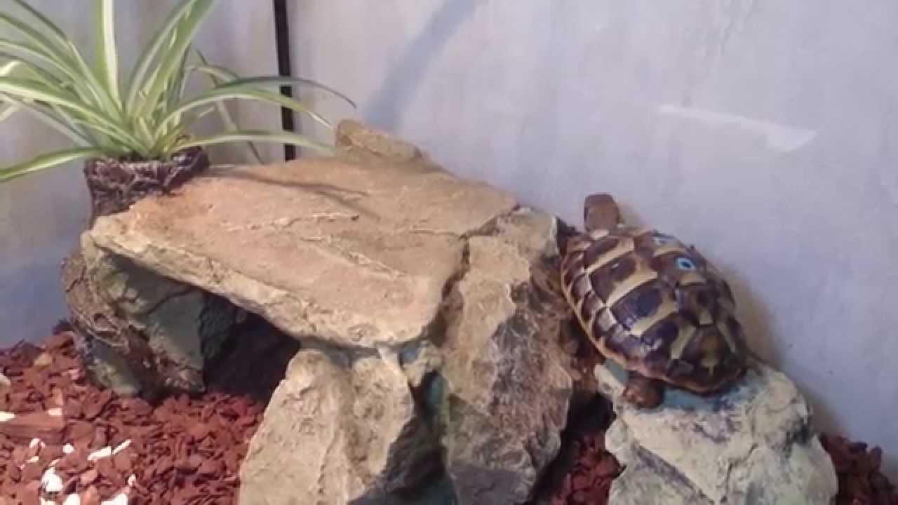 Schildkröten Samy& Luna in neu eingerichtetem Terrarium YouTube ~ 07123836_Sukkulenten Terrarium Einrichten