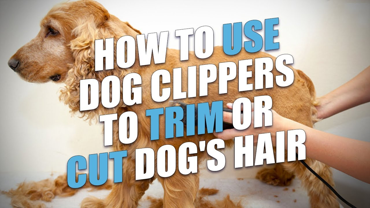 How To Use Dog Clippers To Trim Or Cut Dog S Hair A Quick Method