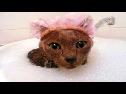 4 you - Funniest Cat Bath Videos
