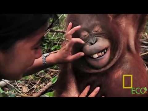 Borneo: Unmasking the Truth (1080p)