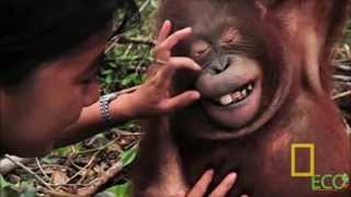 Borneo: Unmasking the Truth (1080p)