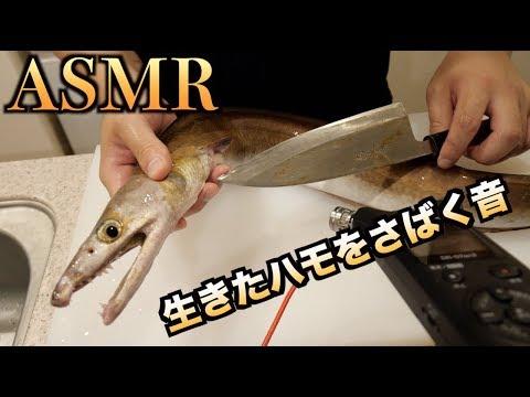 【ASMR】生きたハモをさばく音 【骨切り】