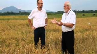 The Future of Rice Farming & the Importance of Partnerships in Rice Research such as GRiSP