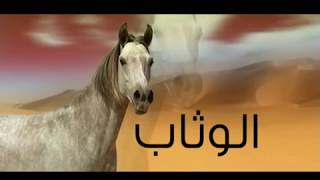 The Original Arab(Yemen) Horses