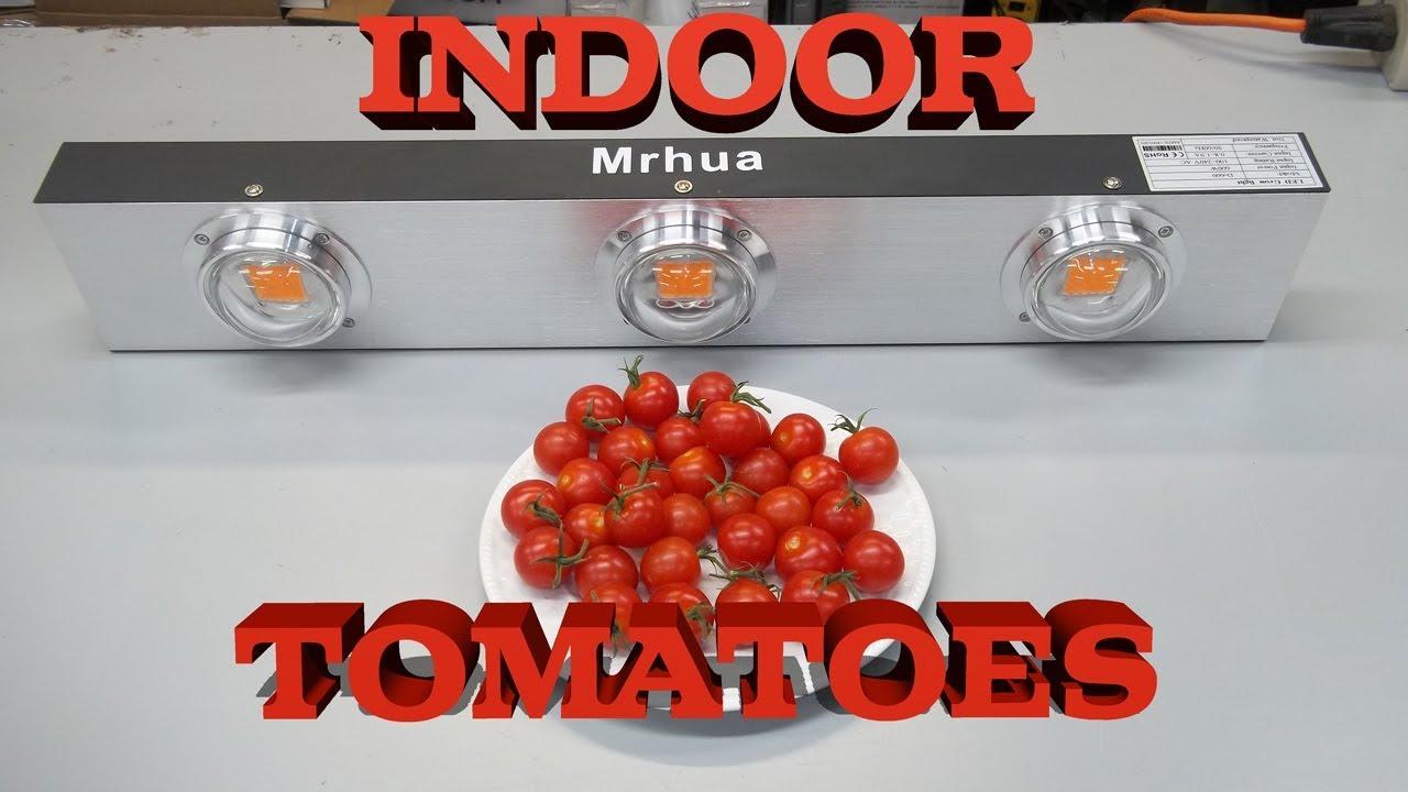 Indoor Tomato Harvest Mrhua 600watt Cob Led Grow Light Review