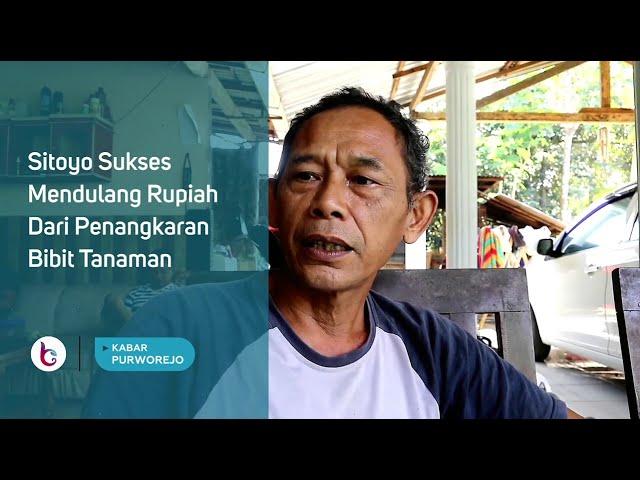 Sitoyo Sukses Mendulang Rupiah Dari Penangkaran Bibit Tanaman