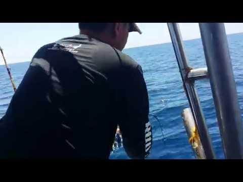 Digia chan malaysia sandakan fishing 2015 05 24