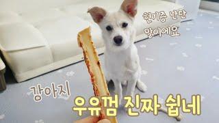 강아지 야채 우유껌 만들기 milk gum 리큅 식품건…