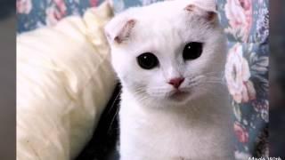 Самые красивые кошки и коты