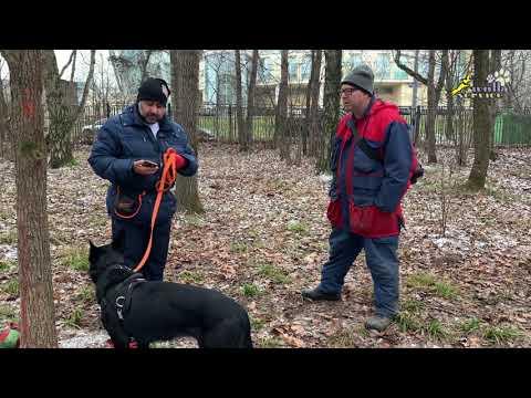 Собака боится, что делать?, уверенность и социализация, дрессировка воспитание щенка