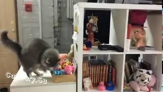 Кошачья работа