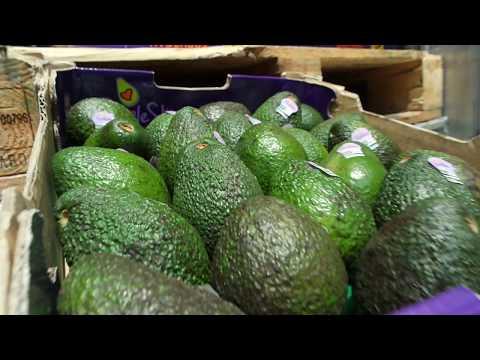 Bravocado - Insights into the avocado industry in Singapore