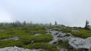 Relaxing Fog blowing across Dolly Sods on West Virginia Day