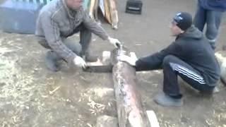 Прикол бензопила дружба-2(по татарски)