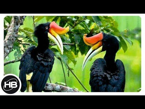 Вопрос: Какие птицы на земле имеют самую необычную окраску?