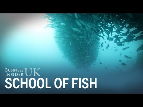 A diver in Colombia bumped into this incredible school of fish