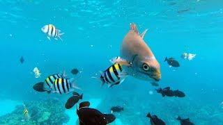 Swimming With The Hawaiian Fishes - Diving Kealakekua Bay Captain Cook Monument, Hawaii