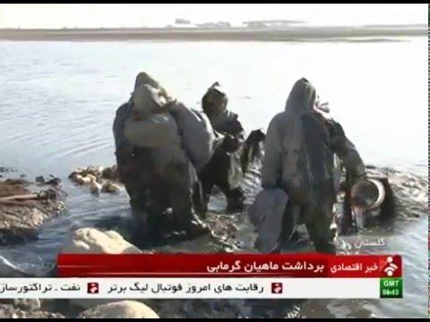 Iran Golestan province, Warm waters Fish farming پرورش ماهيان گرم آبي استان گلستان ايران