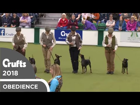 Obreedience - The Ratcatchers | Crufts 2018