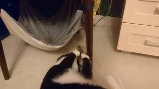 Кот, гамак и любимая игрушка (часть 2)