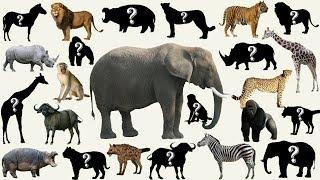 Download lagu Suara binatang untuk anak anak indonesia 60 nama hewan BonBi TV ASIA MP3