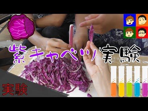 実験企画身近にあるものは酸性アルカリ性紫キャベツ実験がんばらんばTV