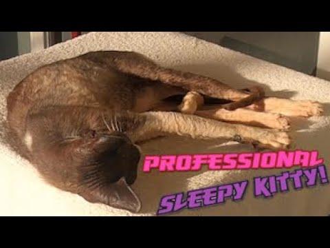 Sleeping Cornish Rex Cat