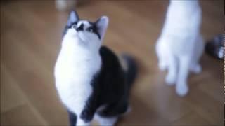 Они живые. Смешные и забавные кошки
