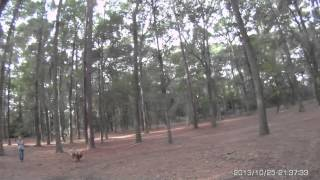 Jeri And Getty Open Area Off Lead HRD Lesson 2