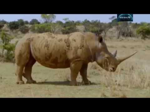 Wildlife Icons Story Animal Planet Full Documentary Udru/Hindi 2018