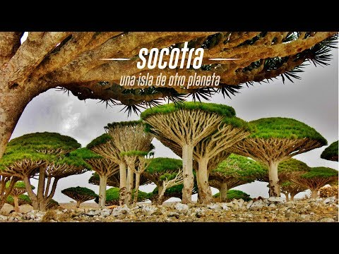Socotra, Una Isla De Otro Planeta