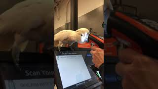 When Home Depot scanner breaks and you cant buy a cockatoo!