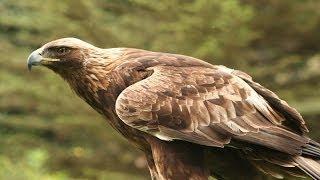 Wildlife On The Isle Of Mull-Part-4