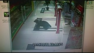 CCTV captures moment a brown bear broke into a Russian shopping mall
