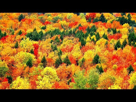 "Peaceful music, Relaxing music, Instrumental Music ""Golden Autumn"" by Tim Janis"