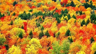 """Peaceful music, Relaxing music, Instrumental Music """"Golden Autumn"""" by Tim Janis - Stafaband"""