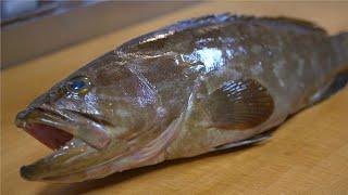 クエを捌く 握りと煮つけの作り方~How to fillet a Longtooth grouper and make sushi and stewed fish~