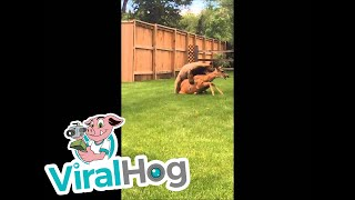 Bear Kills Deer In Residential Neighborhood || ViralHog thumbnail