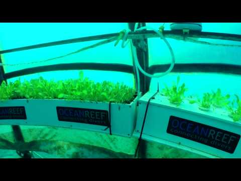 Nemo's Garden - what's it all about - Official Kickstarter Video by OCEAN REEF Ocean Reef Group
