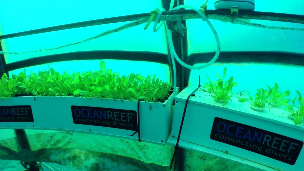 Nemo U0026 39 S Garden - What U0026 39 S It All About - Official Kickstarter Video
