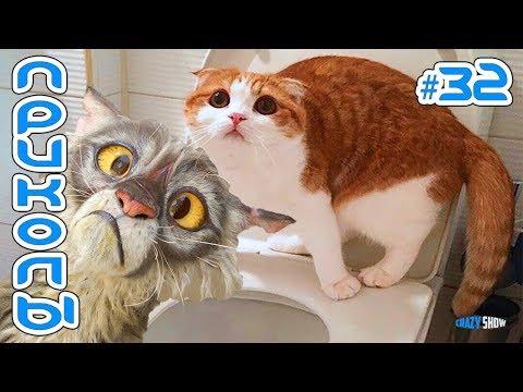 КОТЫ 2019 Смешные коты Приколы с котами до слёз Смешные кошки 2019