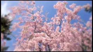 2013春、弘前公園で撮影した桜に音楽を付けました。 ひとしきりつもる花びらに感動。素敵なピアノの旋律に癒されて下さい。 撮影 : 高椋...
