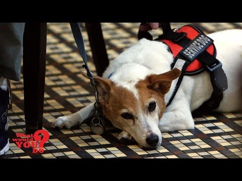 Restaurant manager asks man with service dog to leave | What Would You Do? | WWYD