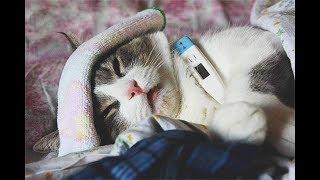 Простуда у кошек / Что делать если кошка заболела / Симптомы и лечение