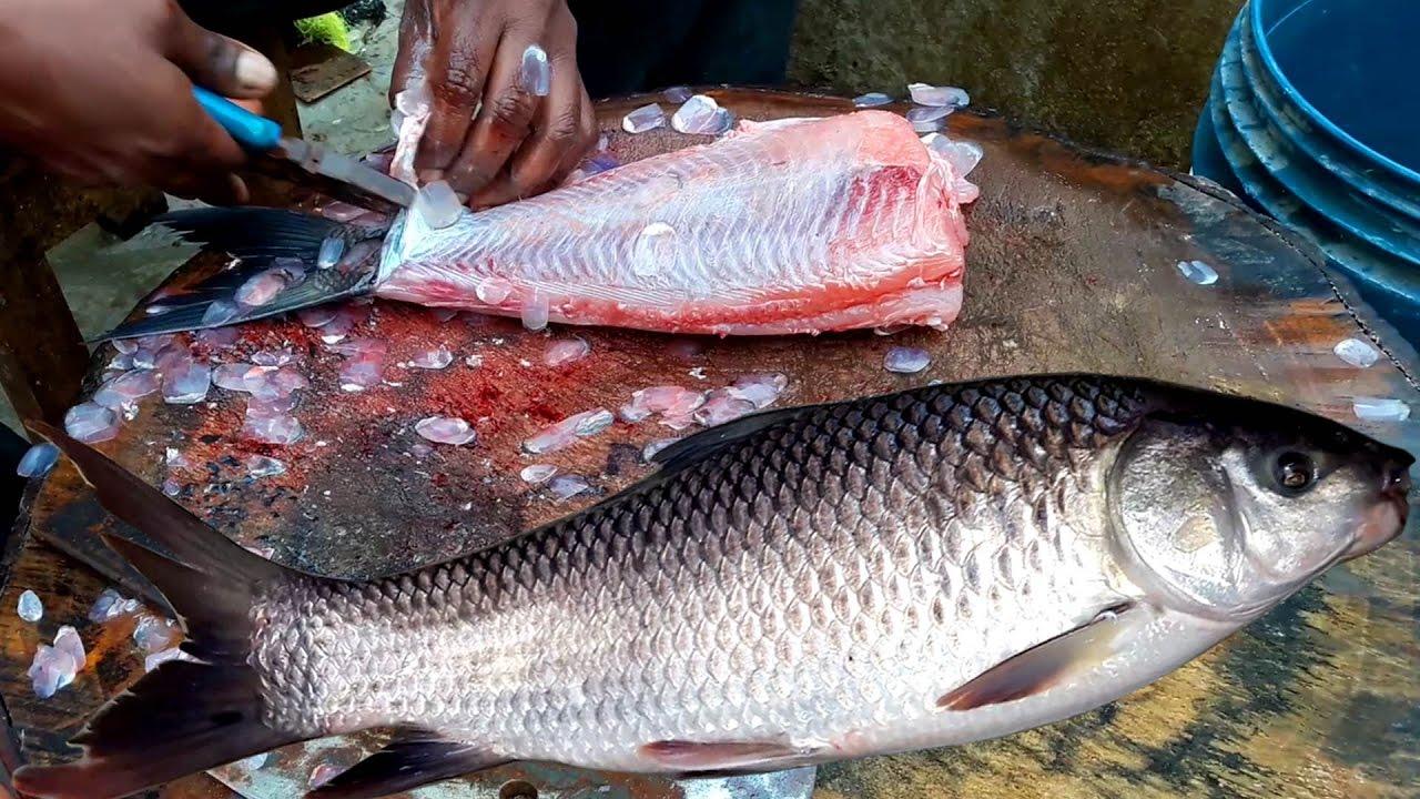 Catla catla live fish cutting catla fish skinless for Live fish online